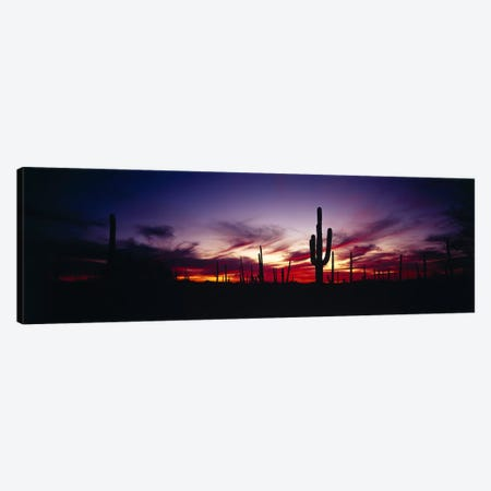 Brilliant Sunset, Saguaro National Park, Pima County, Arizona, USA Canvas Print #PIM2403} by Panoramic Images Art Print