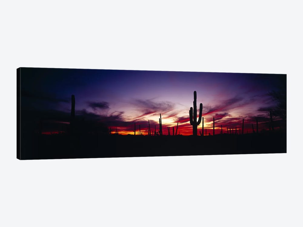 Brilliant Sunset, Saguaro National Park, Pima County, Arizona, USA by Panoramic Images 1-piece Canvas Artwork