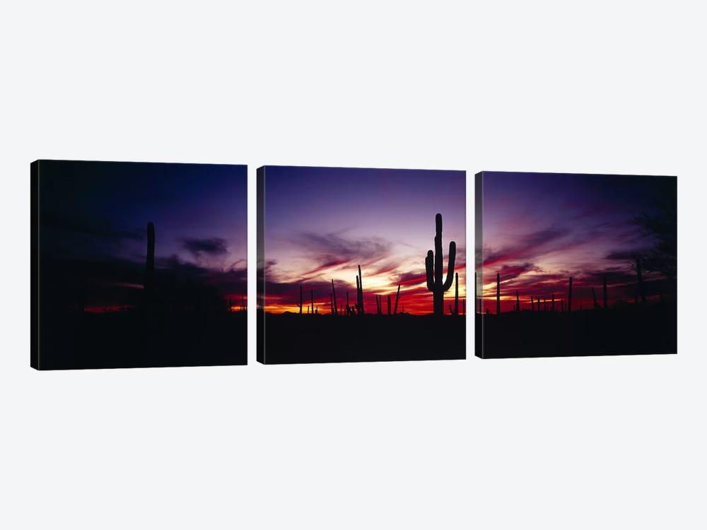 Brilliant Sunset, Saguaro National Park, Pima County, Arizona, USA by Panoramic Images 3-piece Canvas Artwork
