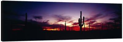 Brilliant Sunset, Saguaro National Park, Pima County, Arizona, USA Canvas Art Print