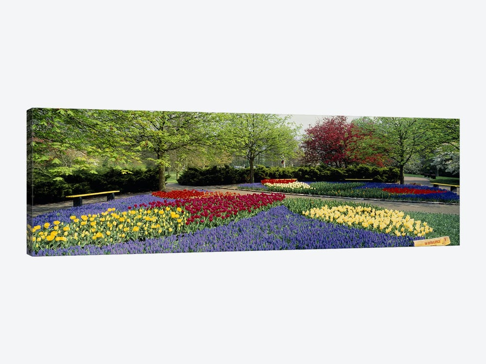 Keukenhof (Garden Of Europe), Lisse, South Holland, Netherlands by Panoramic Images 1-piece Canvas Print