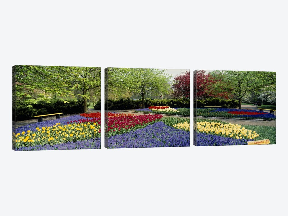 Keukenhof (Garden Of Europe), Lisse, South Holland, Netherlands by Panoramic Images 3-piece Canvas Art Print