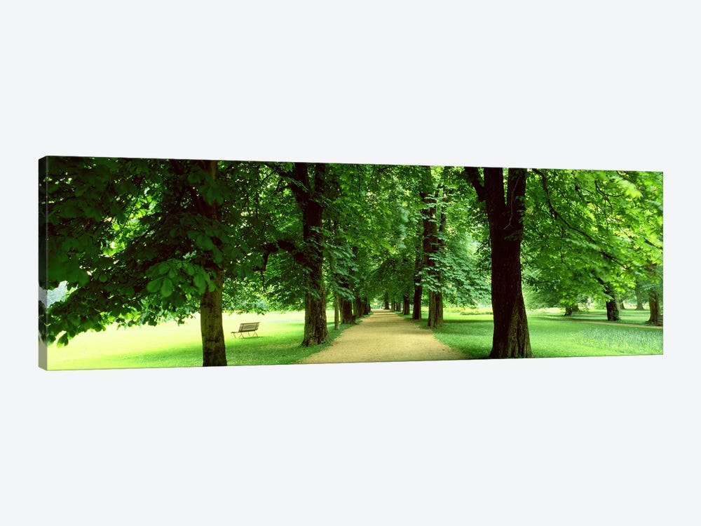 Trees Salzburg Austria by Panoramic Images 1-piece Art Print