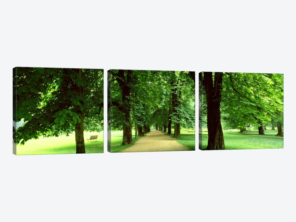 Trees Salzburg Austria by Panoramic Images 3-piece Canvas Art Print