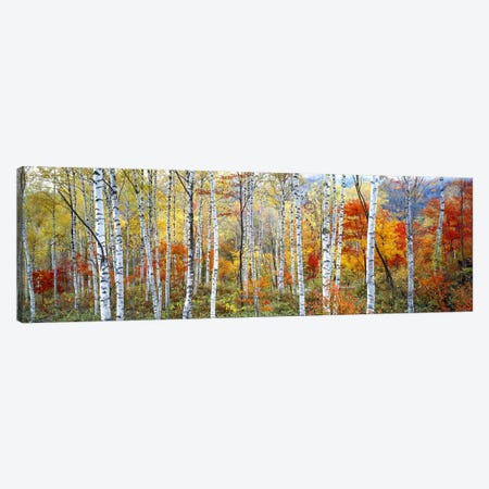 Fall Trees, Shinhodaka, Gifu, Japan Canvas Print #PIM2427} by Panoramic Images Canvas Artwork