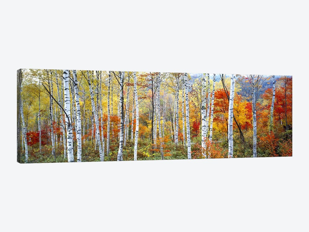 Fall Trees, Shinhodaka, Gifu, Japan by Panoramic Images 1-piece Canvas Art