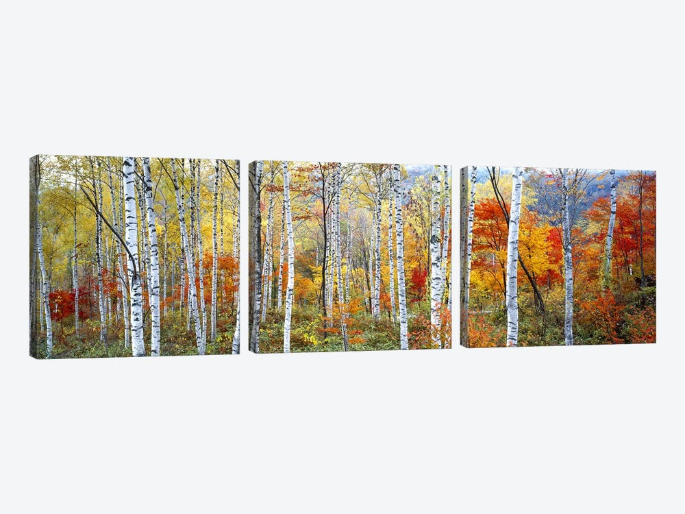 Fall Trees, Shinhodaka, Gifu, Japan by Panoramic Images 3-piece Canvas Art