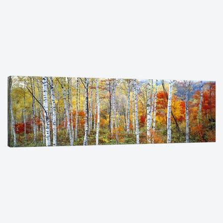 Fall Trees, Shinhodaka, Gifu, Japan Canvas Print #PIM2427} by Panoramic Images Canvas Artwork