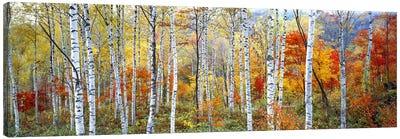 Fall Trees, Shinhodaka, Gifu, Japan Canvas Art Print
