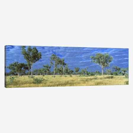 Savannah Bungle Bungle Australia Canvas Print #PIM2474} by Panoramic Images Canvas Art Print