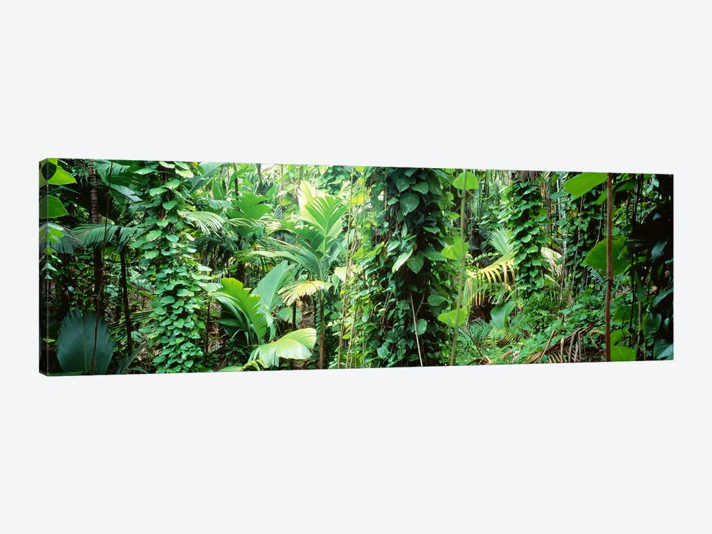 Vegetation Seychelles by Panoramic Images 1-piece Canvas Print