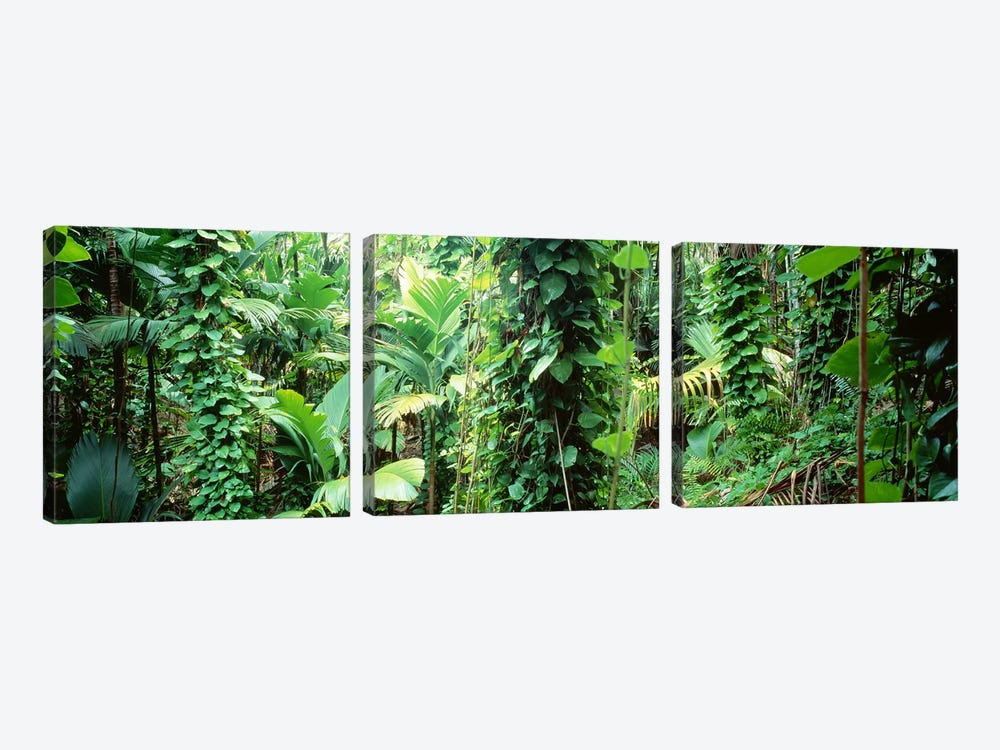Vegetation Seychelles by Panoramic Images 3-piece Canvas Print