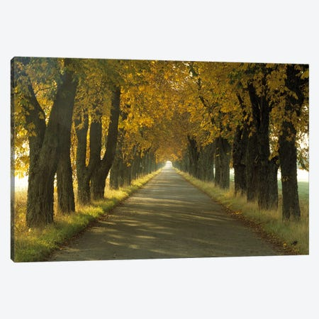 Road w/Autumn Trees Sweden Canvas Print #PIM2476} by Panoramic Images Canvas Art Print