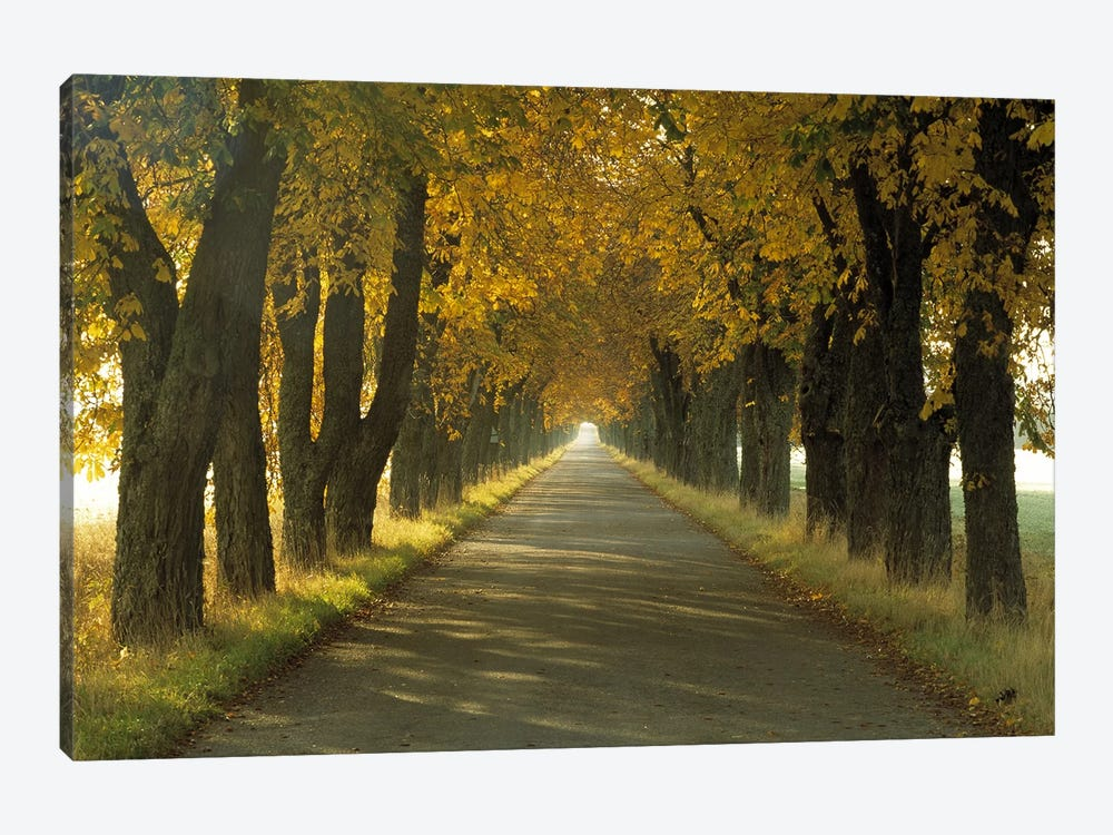 Road w/Autumn Trees Sweden by Panoramic Images 1-piece Canvas Artwork