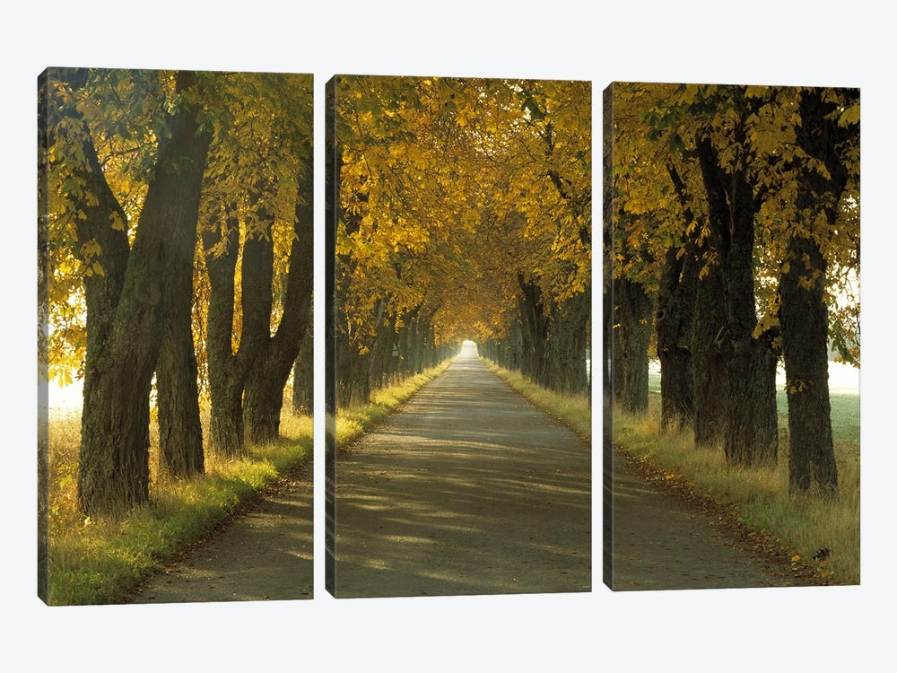 Road w/Autumn Trees Sweden by Panoramic Images 3-piece Canvas Art