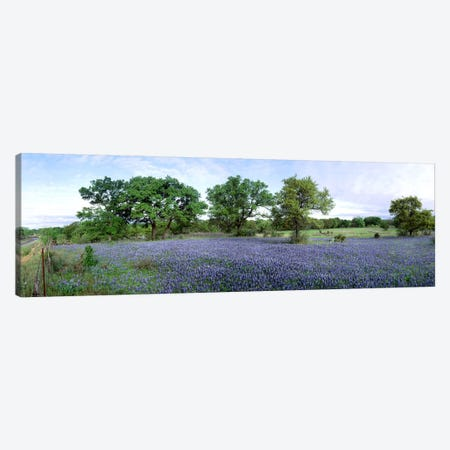 Field Of Bluebonnets, Hill County, Texas, USA 3-Piece Canvas #PIM2495} by Panoramic Images Canvas Print