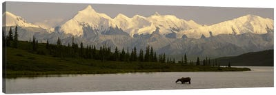 Moose standing on a frozen lakeWonder Lake, Denali National Park, Alaska, USA Canvas Art Print