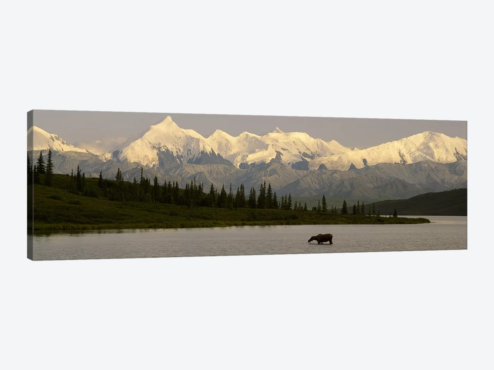 Moose standing on a frozen lakeWonder Lake, Denali National Park, Alaska, USA by Panoramic Images 1-piece Canvas Artwork