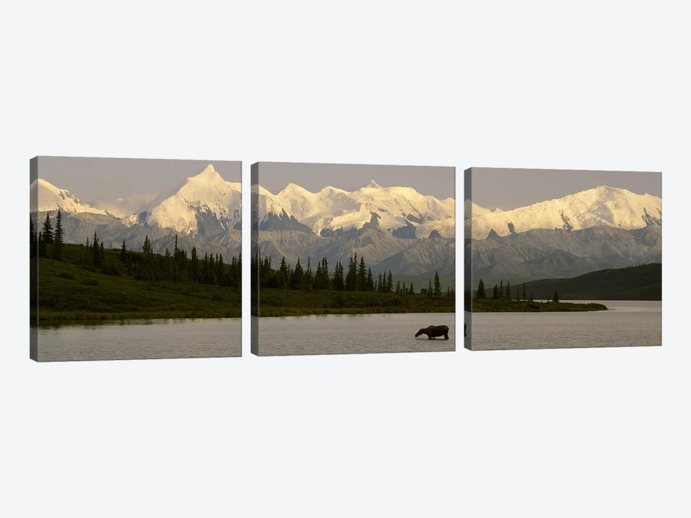 Moose standing on a frozen lakeWonder Lake, Denali National Park, Alaska, USA by Panoramic Images 3-piece Canvas Art