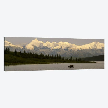 Moose standing on a frozen lakeWonder Lake, Denali National Park, Alaska, USA Canvas Print #PIM2498} by Panoramic Images Canvas Artwork