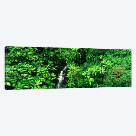 Aerial View Of A Hidden Cascading Stream, Big Island, Hawaii, USA Canvas Print #PIM2501} by Panoramic Images Canvas Wall Art