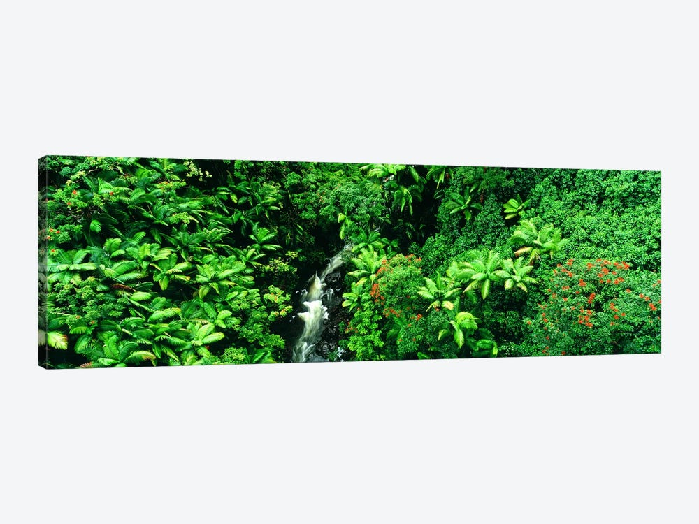 Aerial View Of A Hidden Cascading Stream, Big Island, Hawaii, USA by Panoramic Images 1-piece Canvas Print