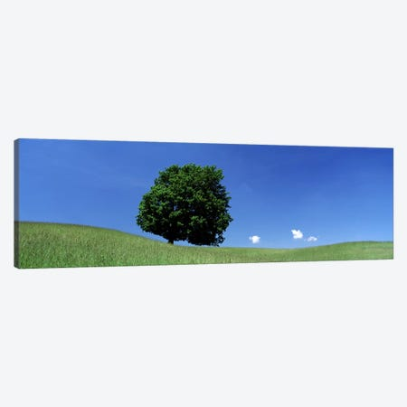 View Of A Lone Tree on A Hillside In Summer Canvas Print #PIM2516} by Panoramic Images Canvas Artwork