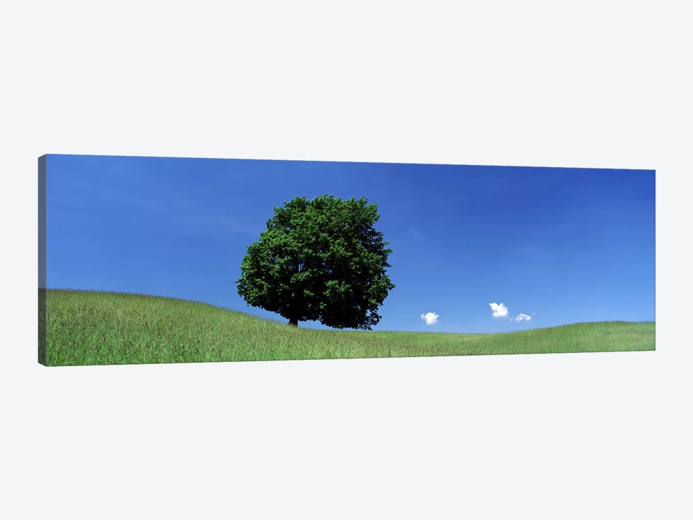 View Of A Lone Tree on A Hillside In Summer by Panoramic Images 1-piece Canvas Art Print