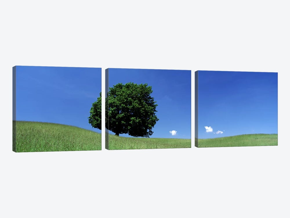 View Of A Lone Tree on A Hillside In Summer by Panoramic Images 3-piece Canvas Art Print