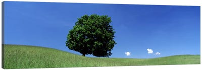View Of A Lone Tree on A Hillside In Summer Canvas Art Print
