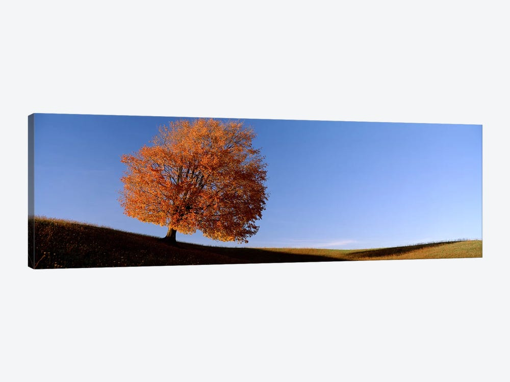 View Of A Lone Tree on A Hill In Fall 1-piece Canvas Wall Art