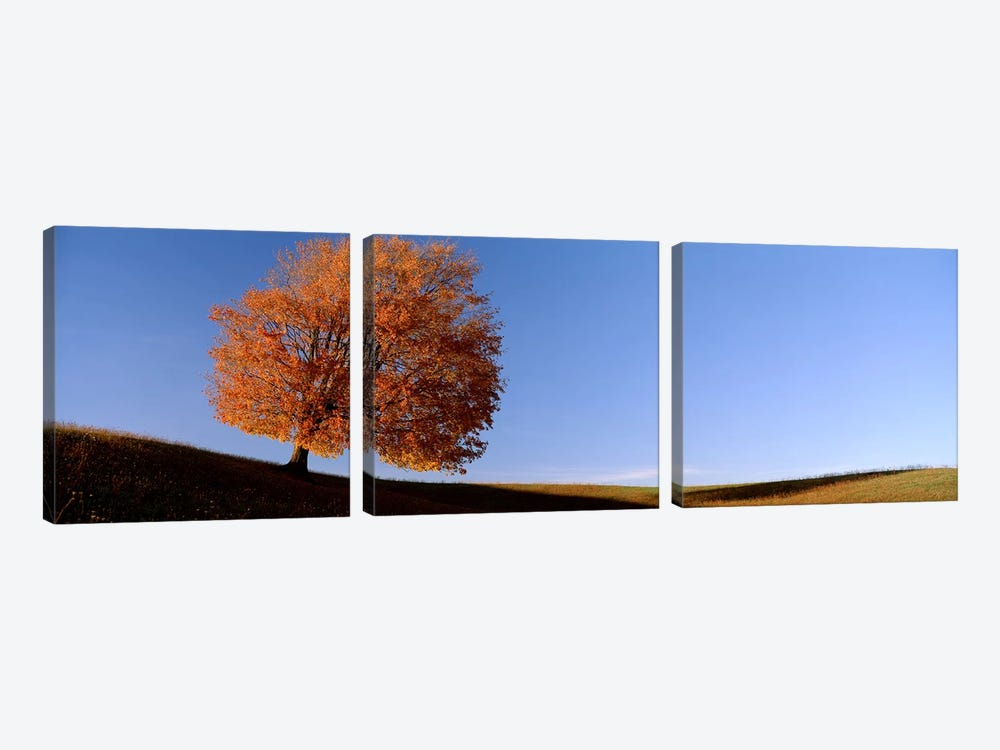 View Of A Lone Tree on A Hill In Fall 3-piece Canvas Wall Art