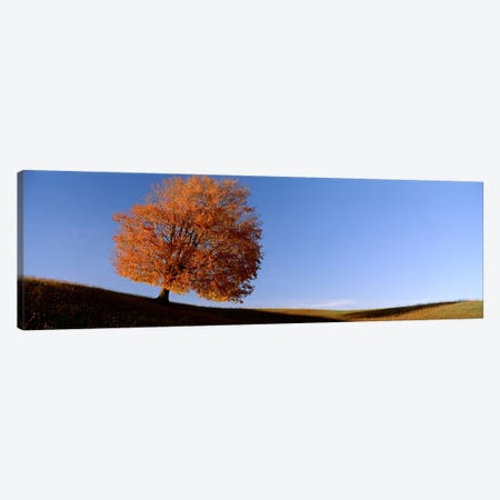View Of A Lone Tree on A Hill In Fall Canvas Print #PIM2517} by Panoramic Images Canvas Art