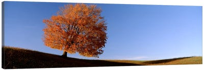 View Of A Lone Tree on A Hill In Fall Canvas Art Print