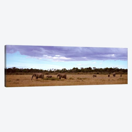 Herd Of Elephants, Masai Mara National Reserve, Kenya, Africa Canvas Print #PIM2548} by Panoramic Images Canvas Wall Art