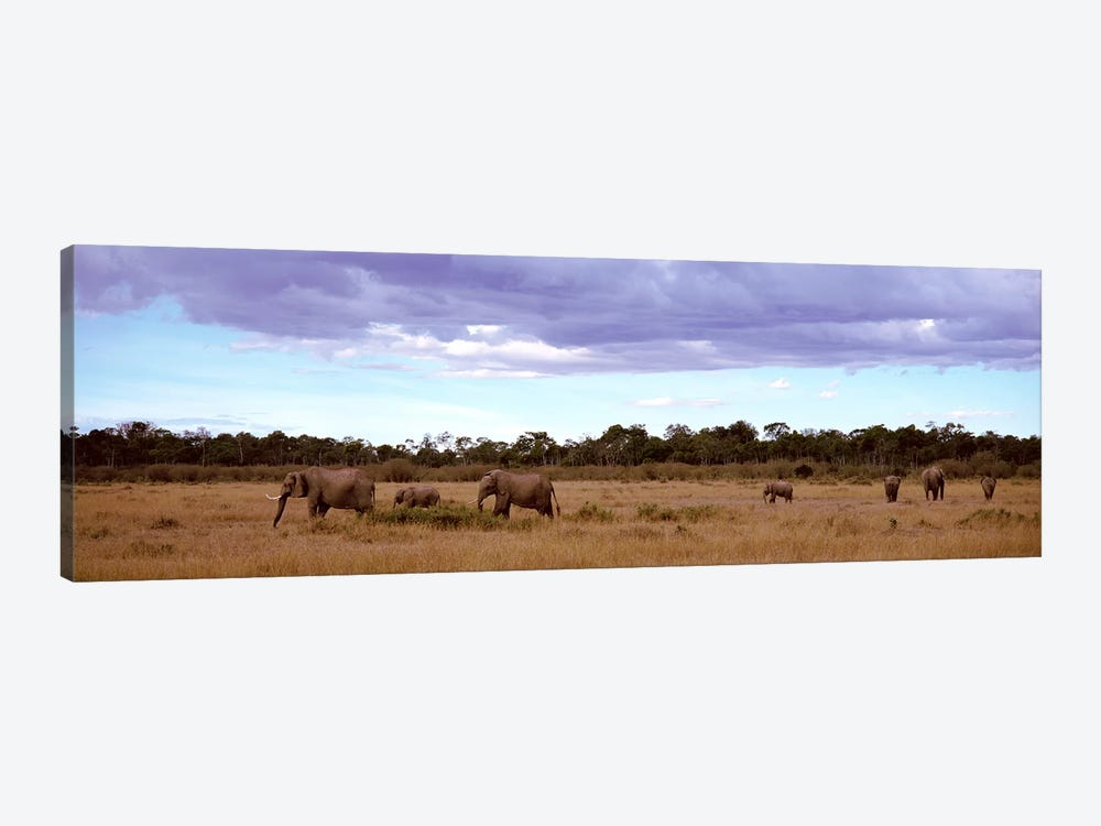 Herd Of Elephants, Masai Mara National Reserve, Kenya, Africa by Panoramic Images 1-piece Canvas Artwork