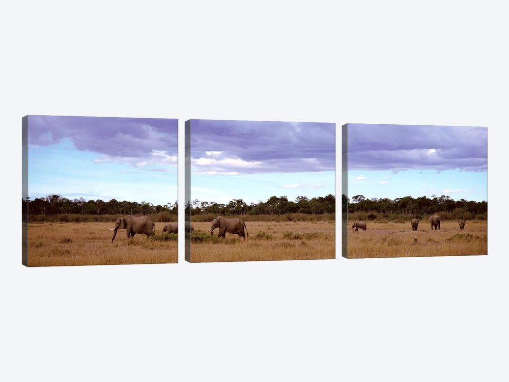 Herd Of Elephants, Masai Mara National Reserve, Kenya, Africa by Panoramic Images 3-piece Canvas Art