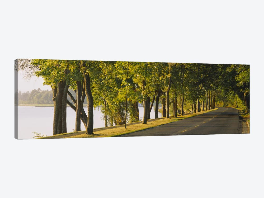Trees along a road, Lake Washington Boulevard, Seattle, Washington State, USA by Panoramic Images 1-piece Canvas Artwork