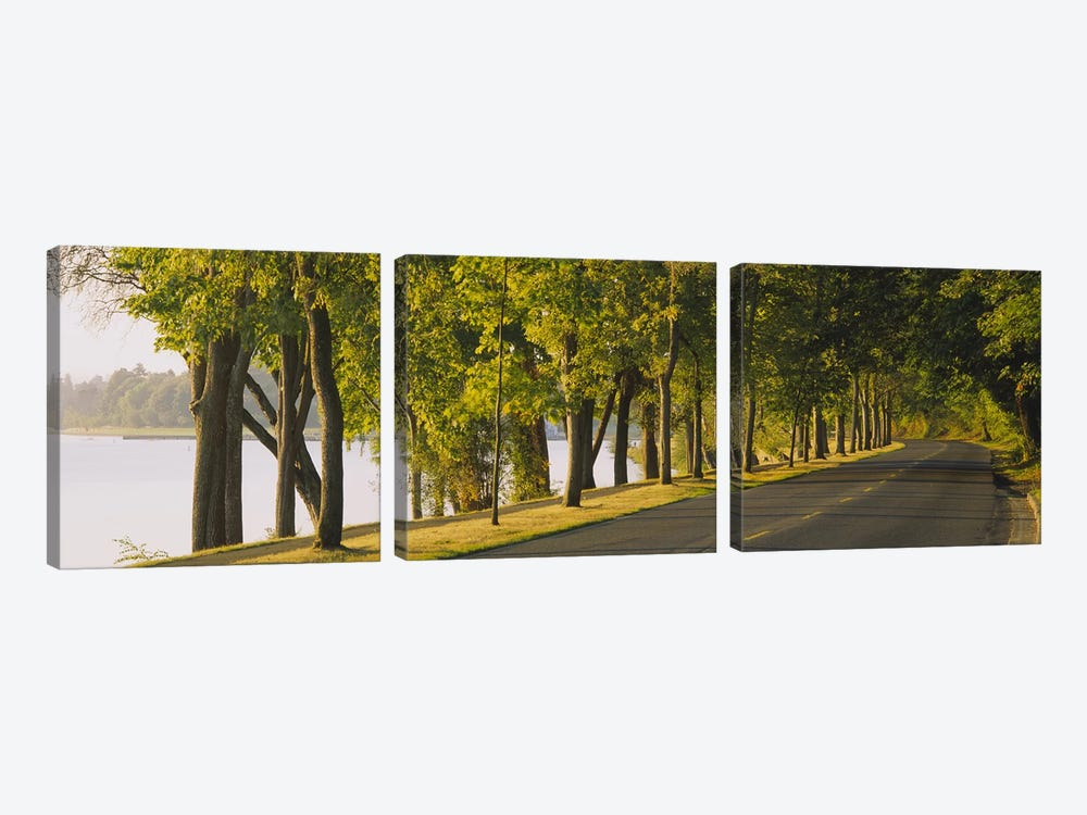 Trees along a road, Lake Washington Boulevard, Seattle, Washington State, USA by Panoramic Images 3-piece Canvas Wall Art