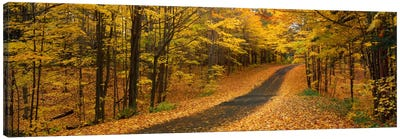 Autumn Road, Emery Park, New York State, USA Canvas Art Print