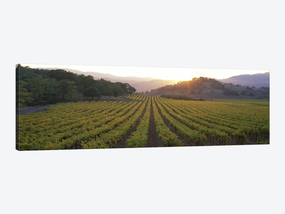 Vineyard Sunset, Napa Valley, California, USA by Panoramic Images 1-piece Canvas Art Print
