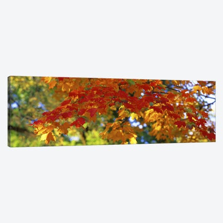 Fall Foliage, Guilford, Baltimore City, Maryland, USA Canvas Print #PIM2657} by Panoramic Images Art Print