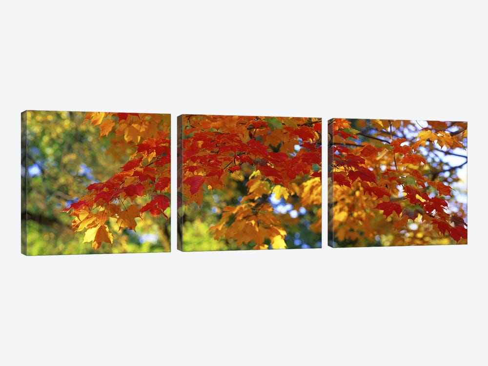 Fall Foliage, Guilford, Baltimore City, Maryland, USA by Panoramic Images 3-piece Canvas Artwork