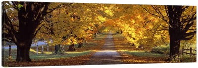 Road, Baltimore County, Maryland, USA Canvas Art Print
