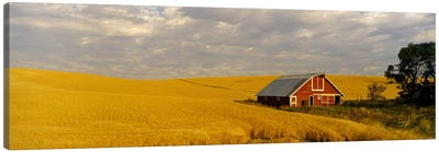 Barn in a wheat field, Palouse, Washington State, USA Canvas Art Print