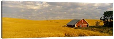 Barn in a wheat field, Palouse, Washington State, USA Canvas Art Print