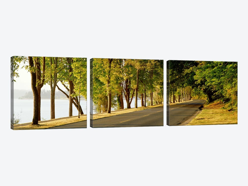 Trees on both sides of a road, Lake Washington Boulevard, Seattle, Washington State, USA by Panoramic Images 3-piece Canvas Art