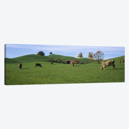 Cows grazing on a field, Canton Of Zug, Switzerland Canvas Print #PIM2684} by Panoramic Images Canvas Wall Art