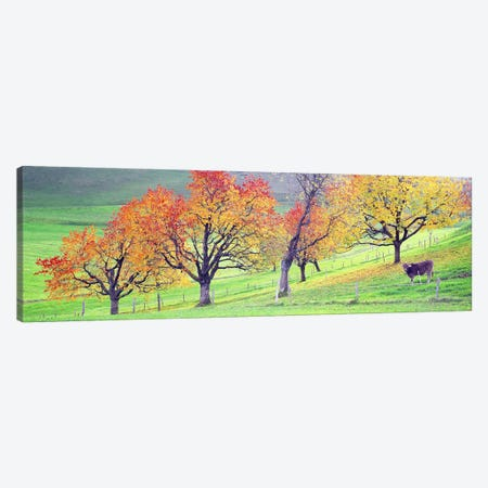 Cow Cantone Zug Switzerland Canvas Print #PIM2690} by Panoramic Images Canvas Art
