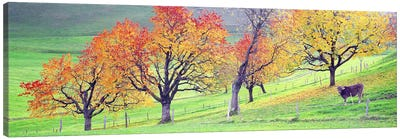 Cow Cantone Zug Switzerland Canvas Print #PIM2690